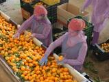 Robots vergroten de waarde van verse groenten en fruit